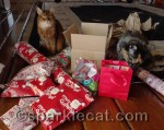 I'm not sure what Binga is doing with the bag - that has the human gifts in it!