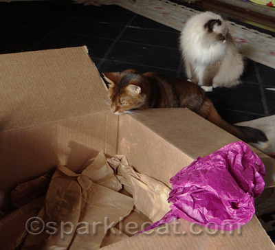 I LOVE crinkly packing paper!