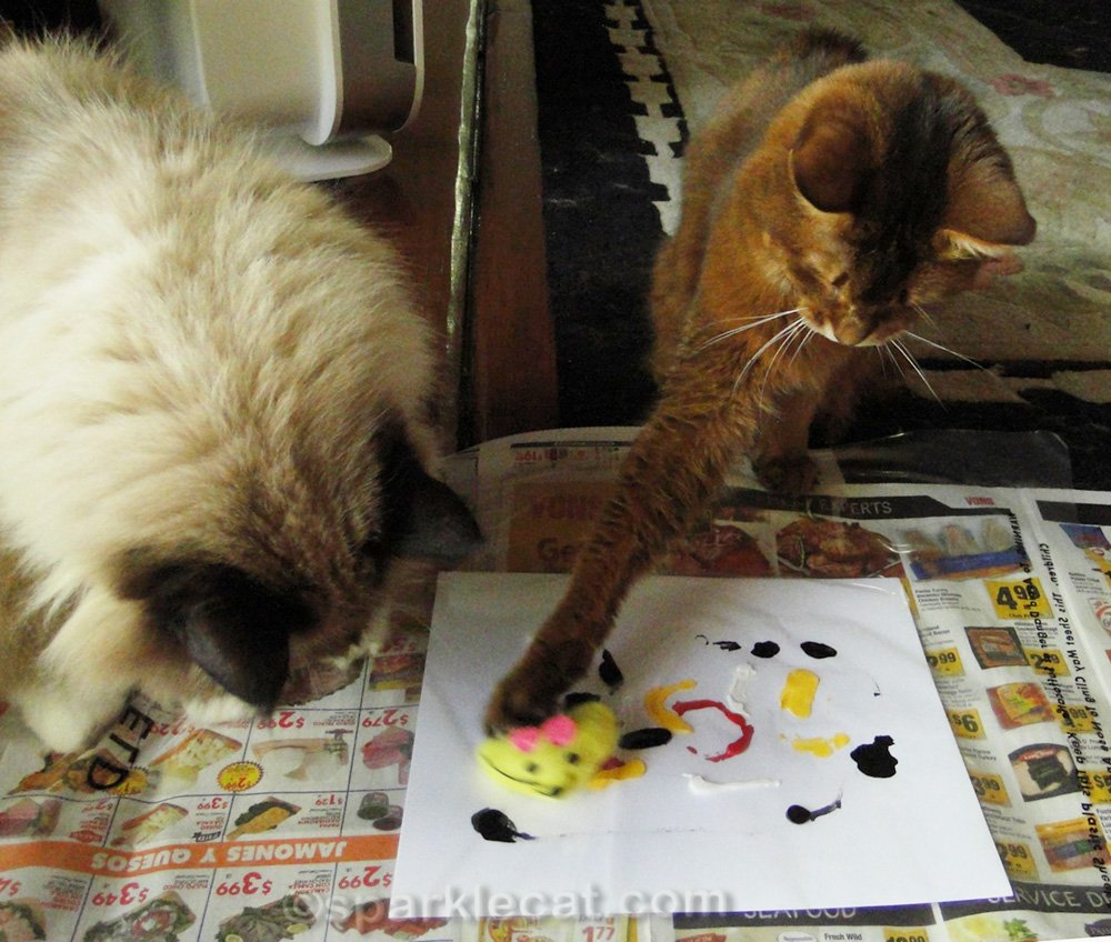 somali cat with cat toy, at work on the painting, while ragdoll cat watches