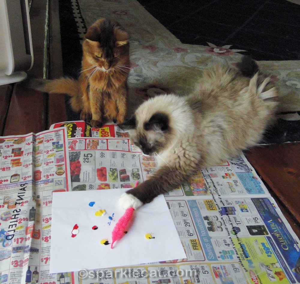 ragdoll cat working on painting while somali cat looks on