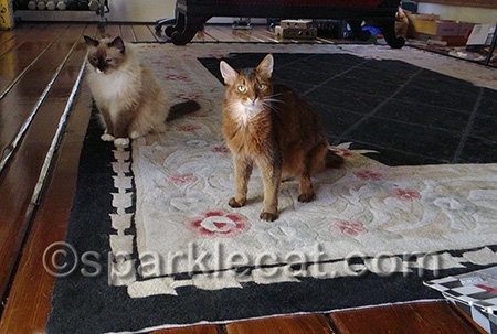 What?! This is OUR rug!