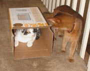 The game is called Cat In The Box