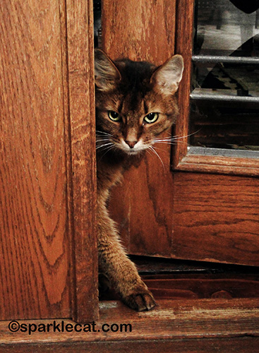 This is me, trying to go out into the should-be-catio