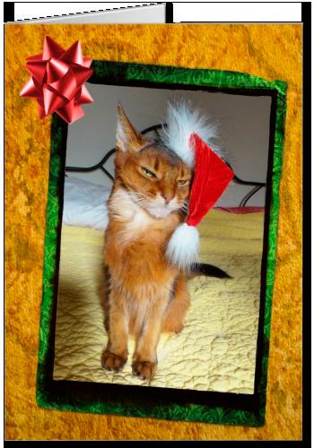 Naughty Kitty Christmas Card, Somali cat Christmas card, grumpy cat