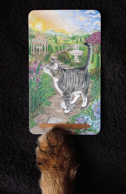 The Cat is a Major Arcana card that is equivalent to the Fool in the Rider-Waite deck