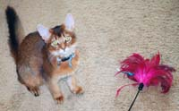 Sparkle and the feather duster
