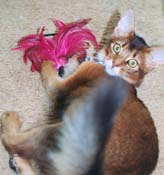 Sparkle playing with the feather duster