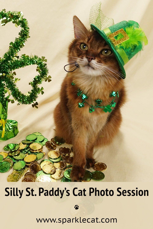 MC Paddy Cat