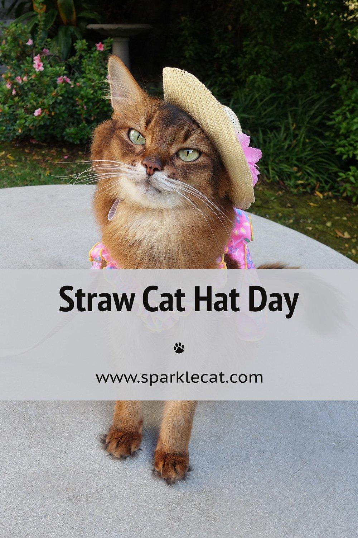 Straw Cat Hat Day