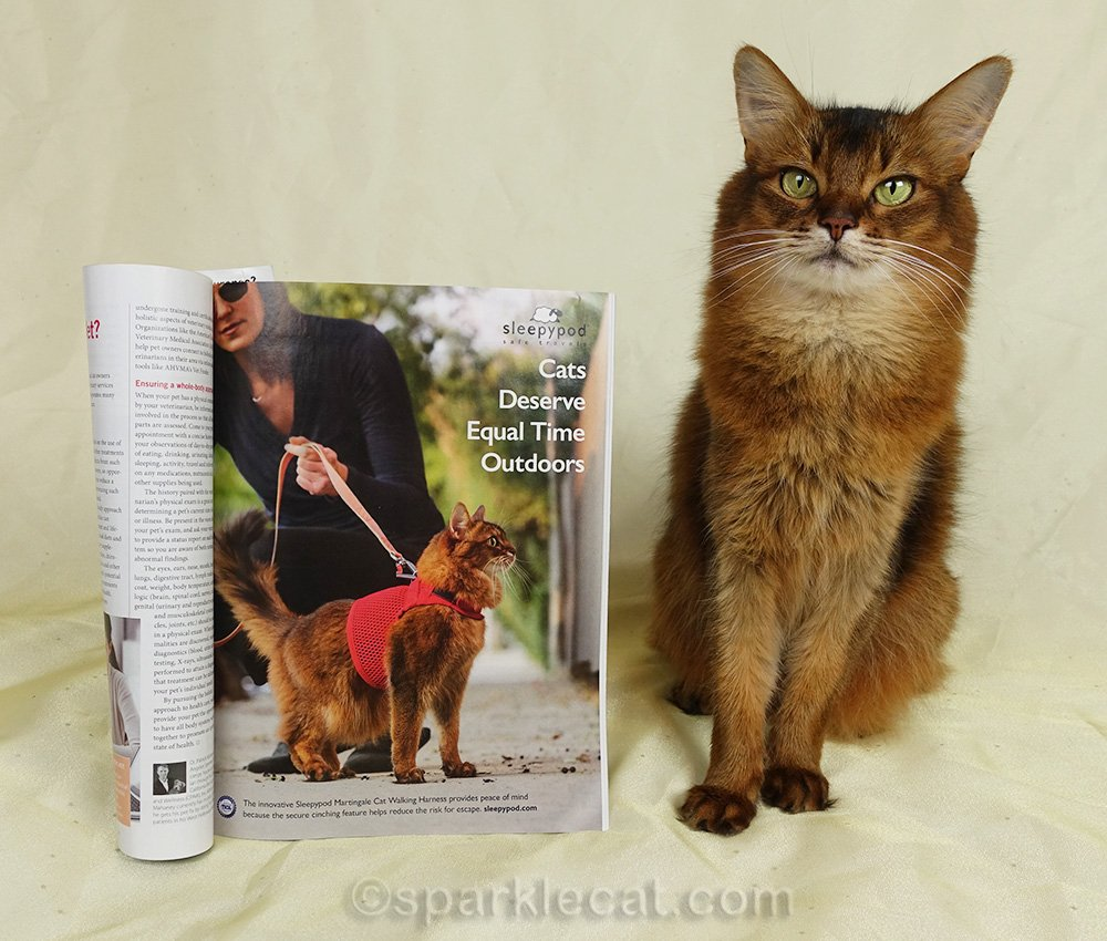 somali cat with full page Sleepypod ad featuring her