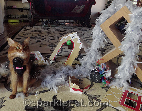 Somali cat, cat party, New Year's Day, wreckage