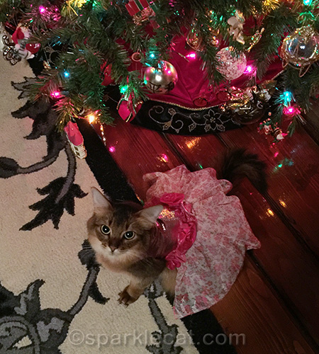 somali cat in pretty pink party dress by Christmas Tree
