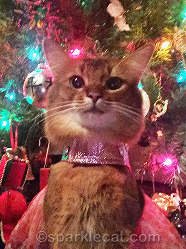 somali cat selfie by Christmas tree