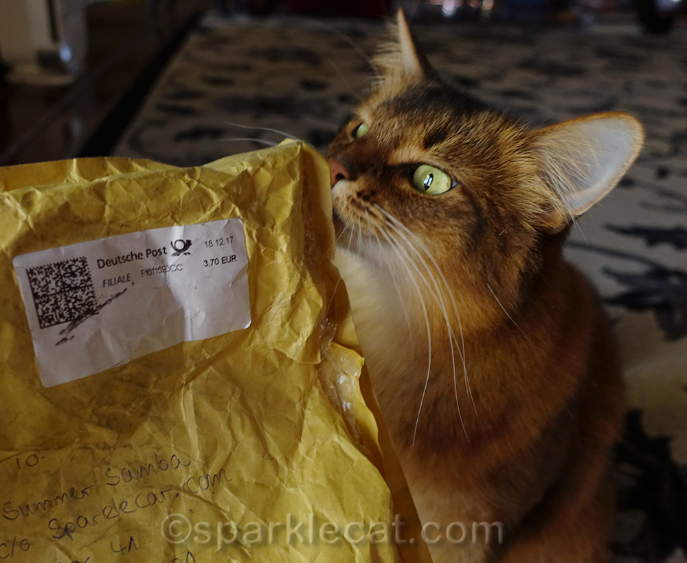 somali cat very interested in package from Germany