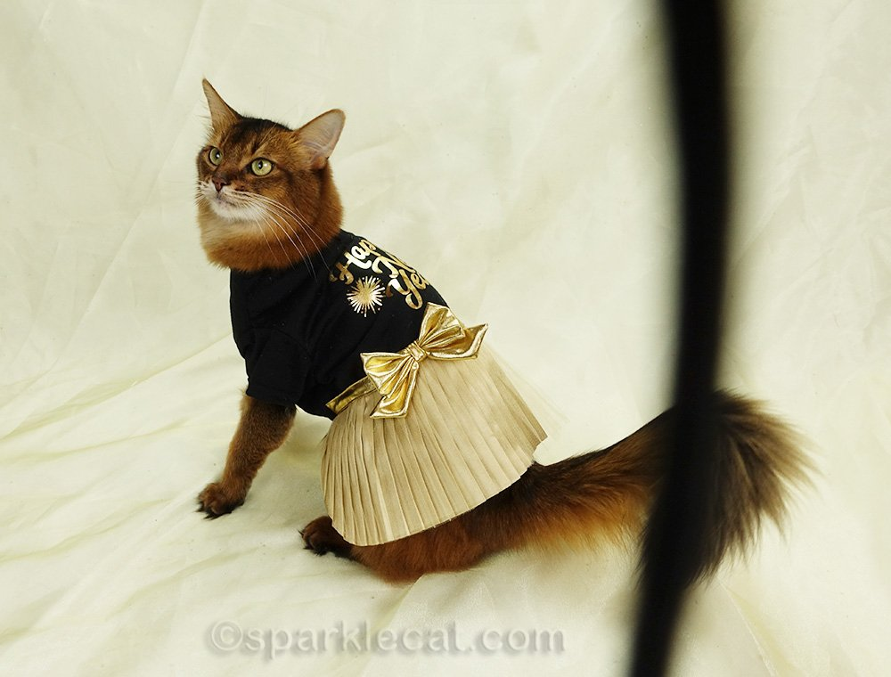 photo of somali cat in new year's eve dress, with camera strap in photo