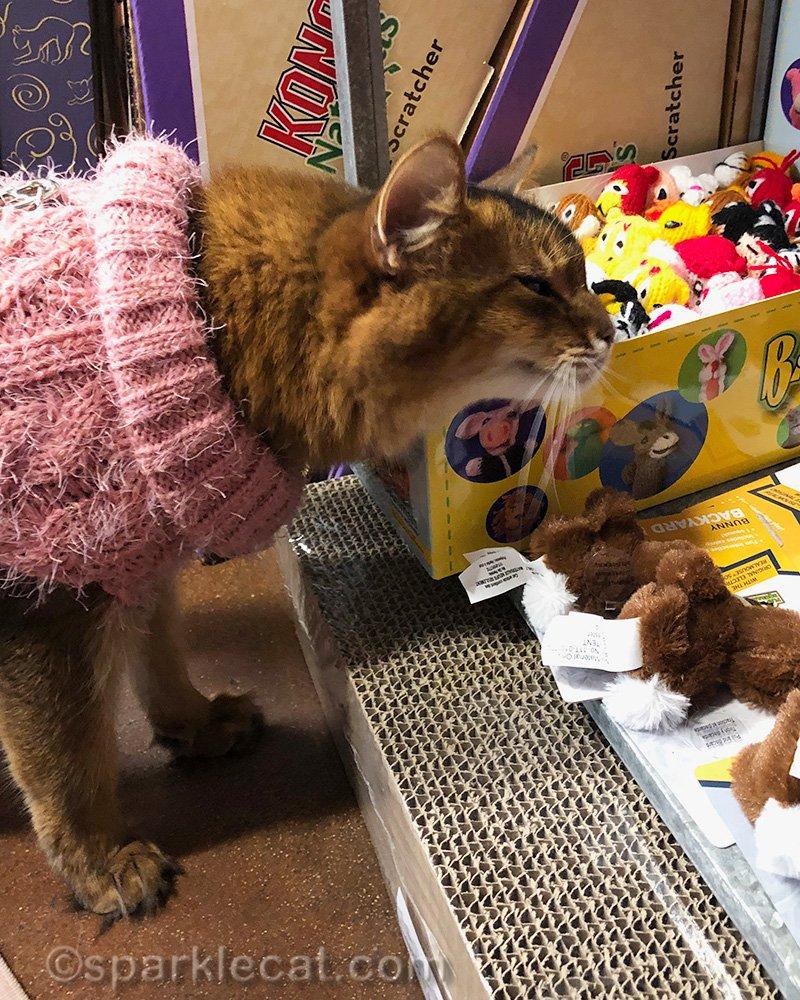 somali cat rubbing on box of Barnyard Buddies cat toys