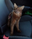 Do's and Don'ts of Traveling With Your Cat