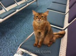 How to Travel With Your Cat on an Airplane