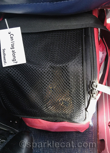 somali cat in carrier under seat in airplane