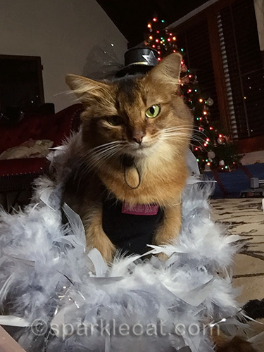Somali cat, New Year's Eve, cat in hat, feather boz