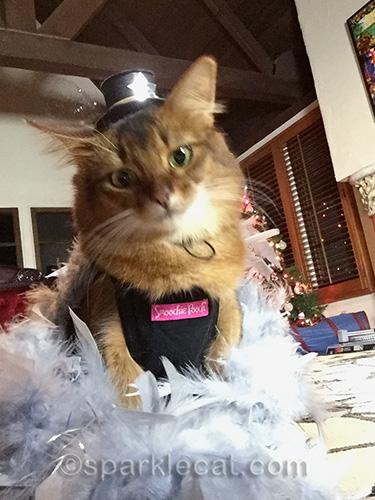 Somali cat, cat selfie, cat in hat