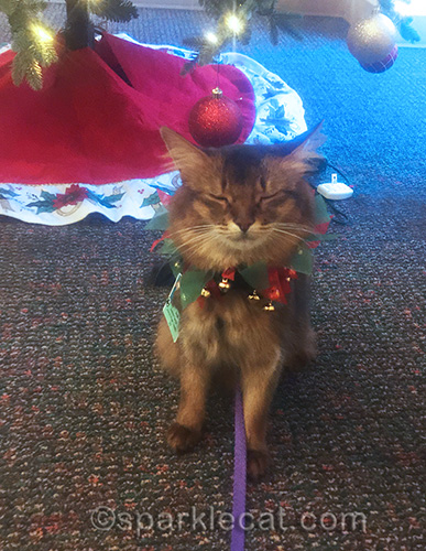 therapy cat at hospital during holidays, with eyes shut