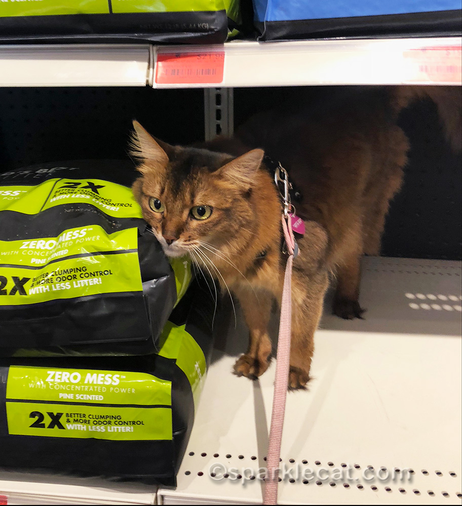 somali cat in kitty litter aisle