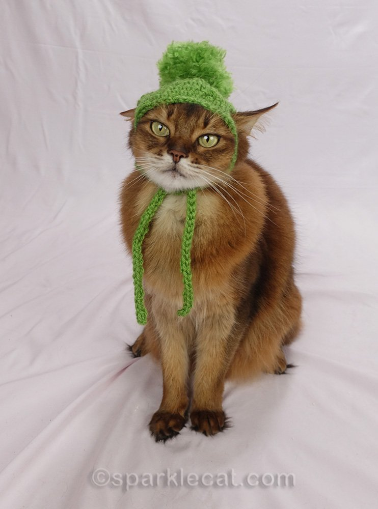Somali cat looking awkward in a chullo hat