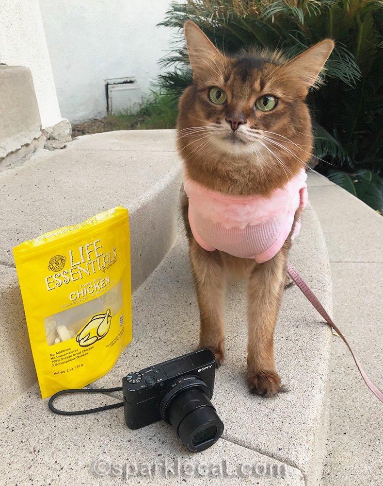 somali cat with treats and camera
