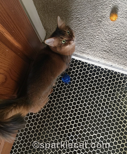 somali cat with two sparkle balls, asking for playtime