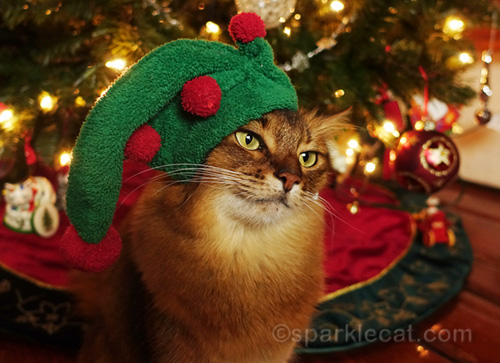 somali cat wearing elf hat by Christmas tree