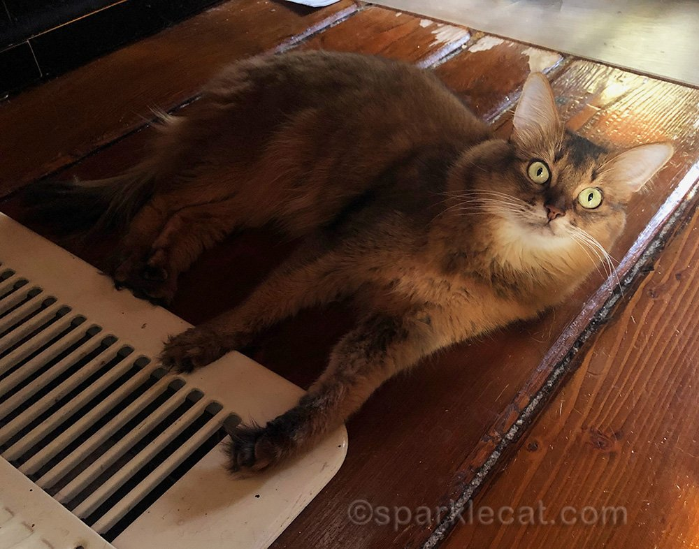 somali cat by floor heater vent
