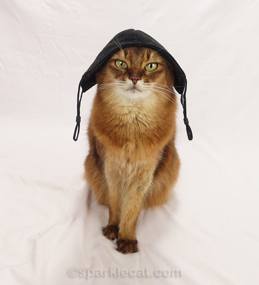 somali cat with black mask on her head