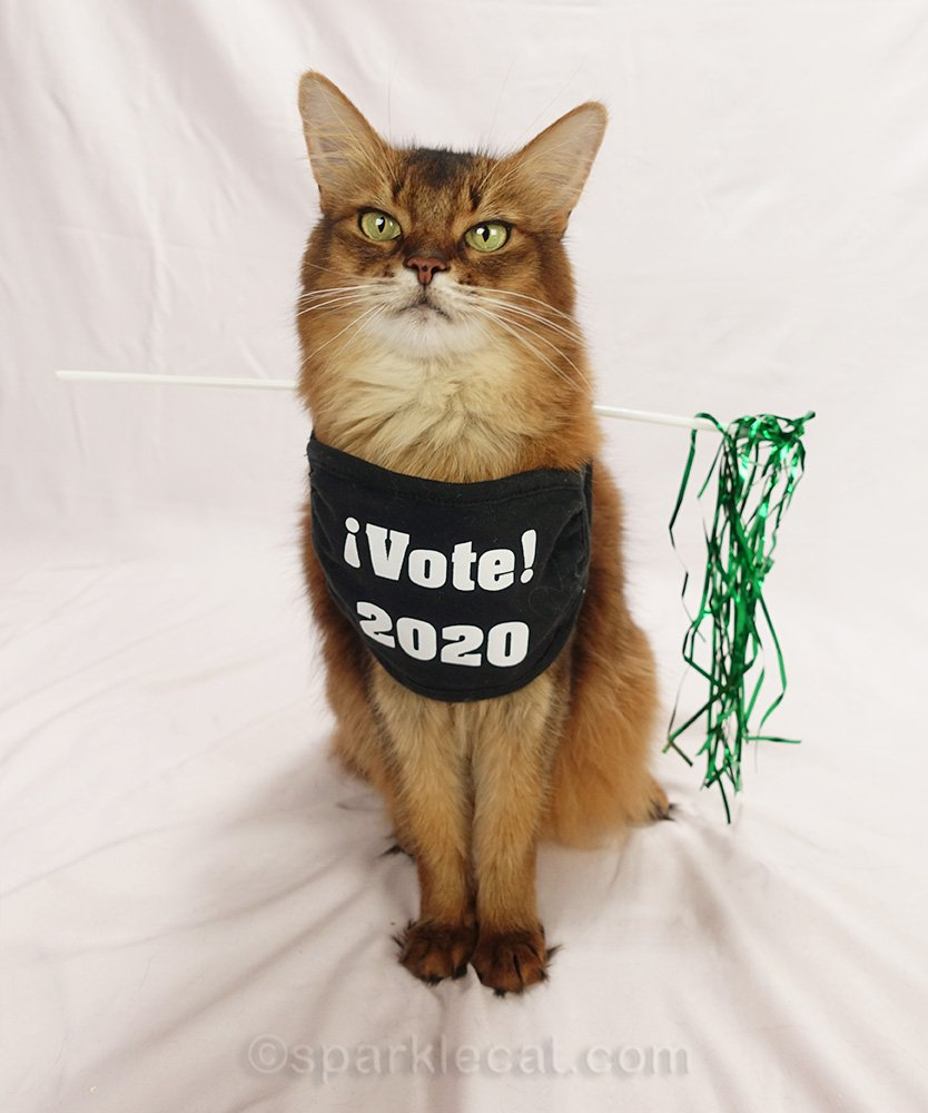 somali cat wearing a Vote face mask