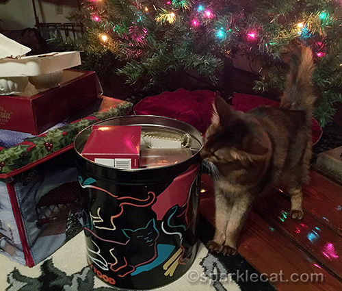 somali cat checks out bin as ornaments are being put away