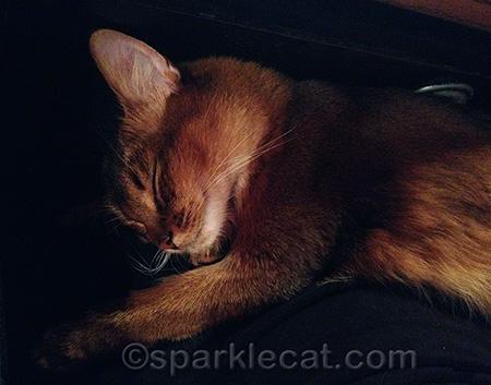 I sleep hard and play hard, just like in Sparkle's Credo