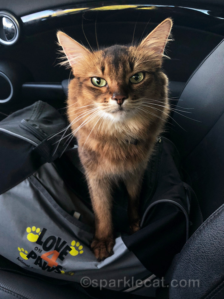 Summer makes a therapy cat to the children's hospital... with extra added purrs