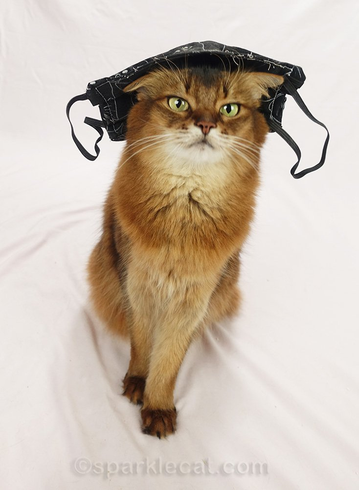 Somali cat with funny face and mask on her head