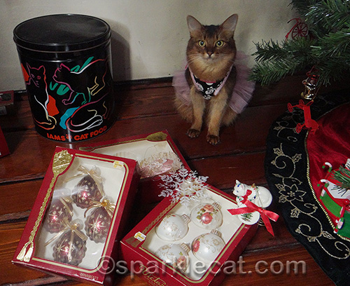 somali cat, cat in dress, cat with Christmas tree, Christmas ornaments