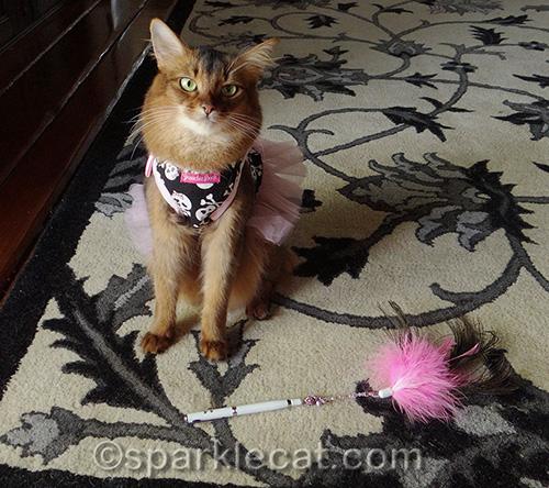 cat toy, Ceylons wanderland cat toy, Somali cat