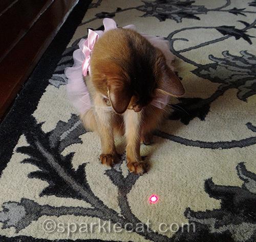 somali cat in a dress, red dot
