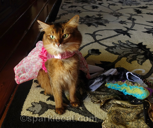 somali cat in pretty pink party dress