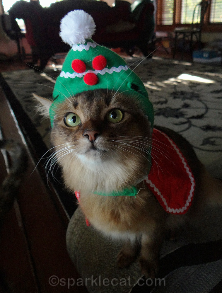 somali cat wearing holiday cat hat