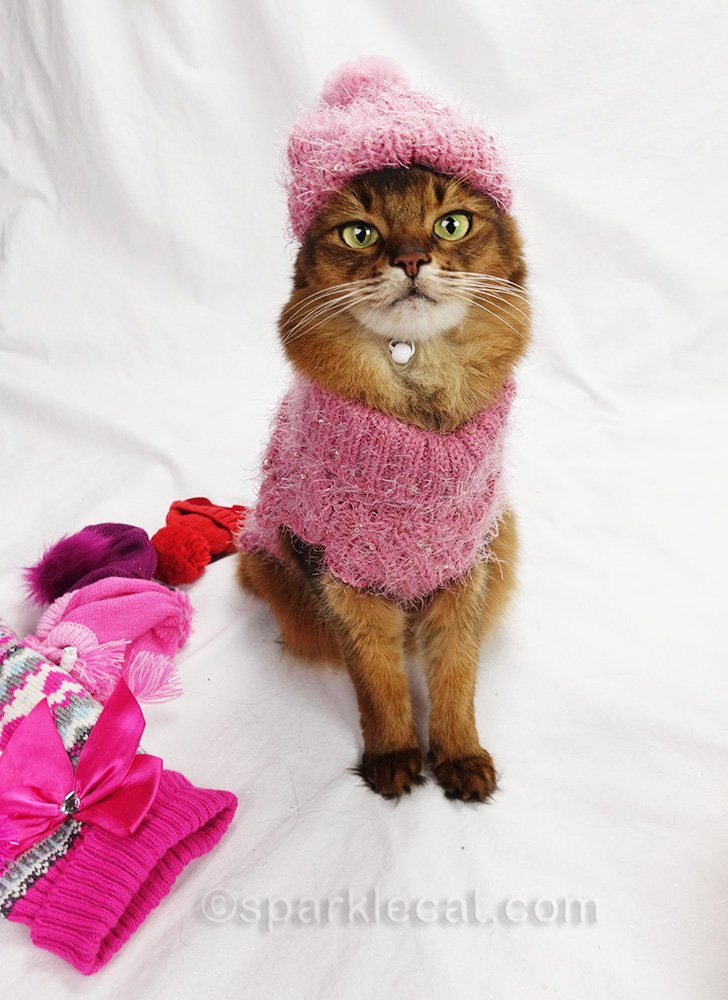 somali cat in pink sparkly sweater and matching hat