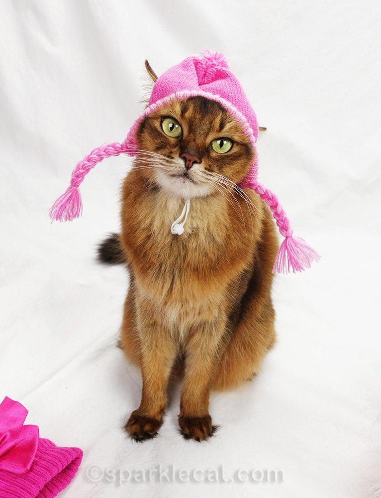 somali cat wearing pink knit hat