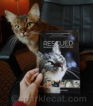 Introducing a Very Special Cat Rescue Anthology