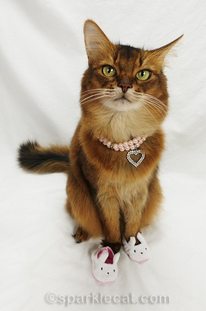 somali cat with bunny slippers and pearl and rhinestone necklace