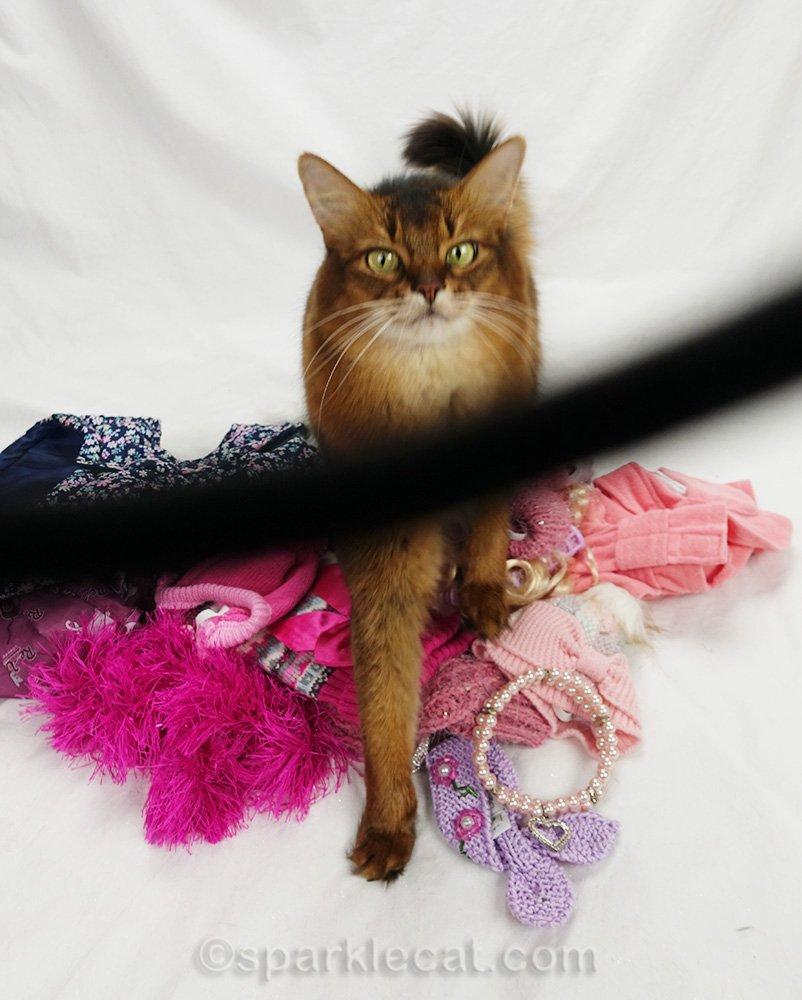 photo of somali cat marred by camera strap