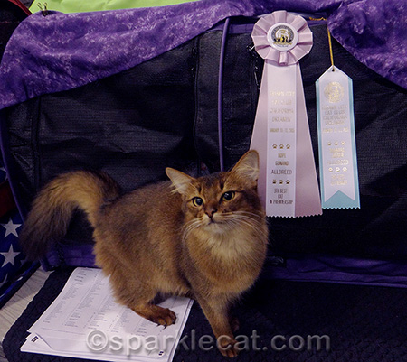 These ribbons matched my cage really nicely!