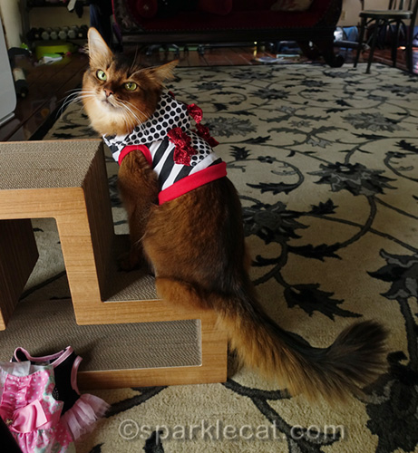 somali cat wearing Valentine's Day themed hoodie